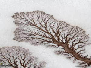 the-most-fascinating-fractals-found-in-nature-4